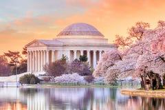 在樱花节日期间的杰斐逊纪念品 免版税库存照片