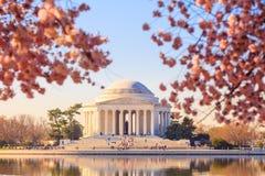 在樱花节日期间的杰斐逊纪念品 免版税图库摄影