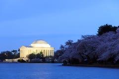 在樱花节日期间的杰斐逊纪念品 Washi 库存照片