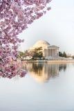 在樱花节日期间的杰斐逊纪念日出 免版税库存照片