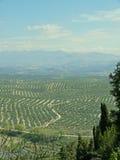 在橄榄树种植园西班牙结构树ubeda附近 免版税库存图片