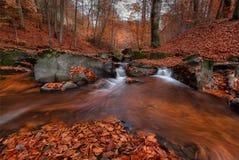 在橘黄色的巨大秋天森林风景与美丽的小河和有薄雾的森林被迷惑的秋天山毛榉森林有红色Fallin的 库存图片