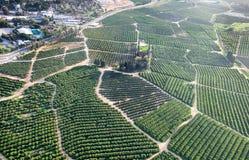在橙树果树园的天线或鸟视图  免版税库存照片