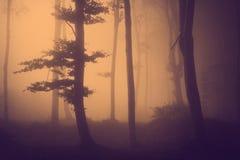 在橙色光的树 大雾在秋天期间的森林里 免版税库存图片