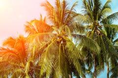 在橙色光的椰子树树 与掌上型计算机的热带横向 免版税图库摄影