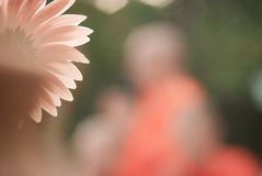 在橙色口气的美好的花背景 库存照片