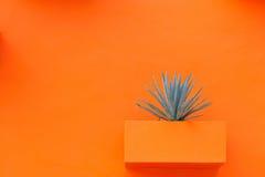 在橙色墙壁上的工厂 免版税库存图片