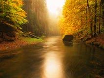 在橙色山毛榉盖的山河上的日落离开 水面上弯曲的分支 免版税库存照片