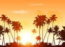 在橙色日落天空的棕榈剪影 库存图片