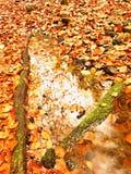 在橙色框架的自然镜子 下落的山毛榉在山河中水离开  免版税库存图片