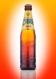 在橙色背景的眼镜蛇优质啤酒 免版税图库摄影