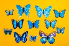 在橙色背景的蓝色蝴蝶 图库摄影