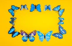 在橙色背景的蓝色蝴蝶 免版税库存图片