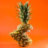 在橙色背景,方形的射击的艺术性的切的,站立的菠萝 库存照片