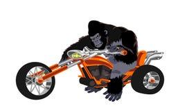 在橙色自行车的大猩猩 免版税库存照片