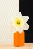 在橙色花瓶的乳脂状的黄水仙 免版税库存图片