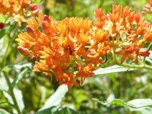 在橙色花的昆虫 库存图片