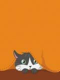 在橙色织品下掩藏的CAT 库存照片
