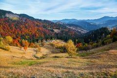 在橙黄色的树附近森林的美丽的草坪有一个老小屋 免版税库存照片