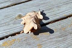 在橡木一片唯一下落的秋天叶子的木板上  免版税库存照片