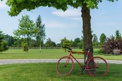 在橡木下的红色自行车 库存照片