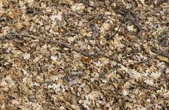 在橡木叶子床上的一只蝴蝶  库存照片