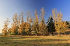 在橡木幽谷地区的美好的秋天颜色 免版税库存图片