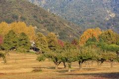 在橡木幽谷地区的美好的秋天颜色 免版税图库摄影