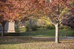 在橡木幽谷地区的美好的秋天颜色 库存图片