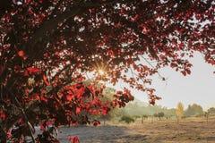 在橡木幽谷地区的美好的秋天颜色 图库摄影