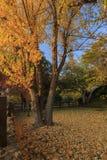 在橡木幽谷地区的美好的秋天颜色 库存照片