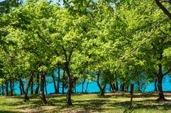 在橡木树丛的看法 免版税库存图片