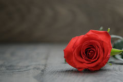 在橡木桌上的一朵红色玫瑰 库存照片