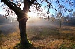 在橡木秋天树后的日出 库存图片