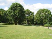 在橡树中的草甸 免版税库存图片