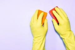 在橡胶手套的两只人的手与在紫色背景的海绵 库存图片