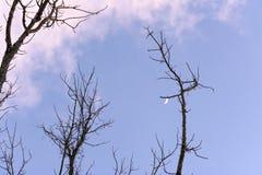 在次日的月亮 图库摄影