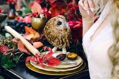 在欢乐婚礼桌上的猫头鹰与红色秋叶 背景装饰详细资料高雅花邀请丝带婚礼 附庸风雅 库存照片