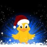 在欢乐背景的圣诞节小鸡 免版税库存图片