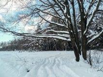 在欢乐雪礼服的多枝橡树有柔和的蓝天的在背景中 免版税图库摄影