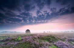 在欧石南丛生的荒野的多云日出 免版税图库摄影