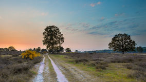 在欧石南丛生的荒野的日落在荷兰 免版税库存图片