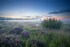 在欧石南丛生的荒野的有薄雾的日出 免版税库存照片