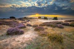 在欧石南丛生的荒野的Veluwe日落与希斯 库存照片