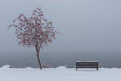 在欧肯纳根湖基隆拿不列颠哥伦比亚省的公园长椅在冬天 库存照片