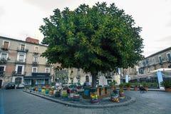 在正方形的美丽的树在卡塔尼亚的中心在西西里岛,意大利 免版税库存图片