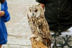 在正方形的被驯服的严肃的猫头鹰在城市 免版税图库摄影