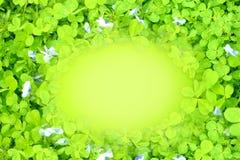 在正确的绿色被弄脏的背景的三叶草叶子 免版税图库摄影