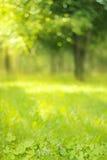 在正确的绿色被弄脏的背景的三叶草叶子 图库摄影