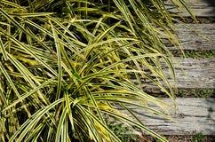 在步行方式旁边的好的黄色植物 免版税库存图片